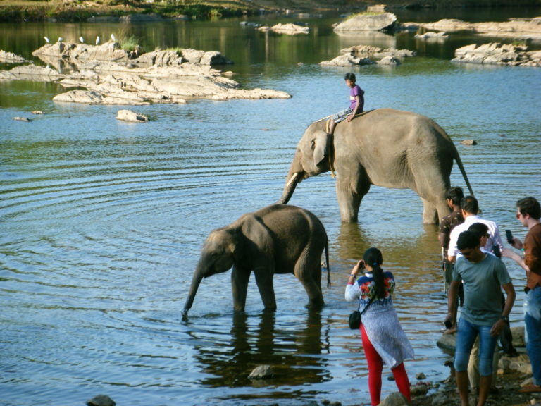 People and elephants wading in the river in India