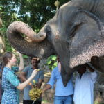 Student feeds an elephant